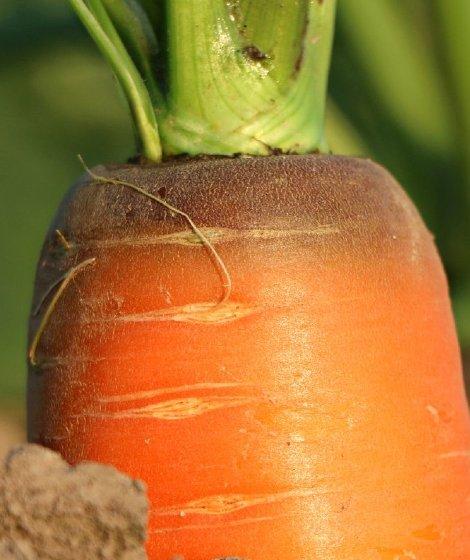 Markets Crop protection & Biocontrol innovia